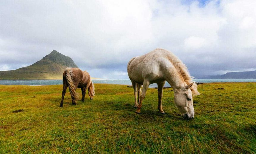 Lovers to Travel Can Now Visit Green Farm in Indonesia