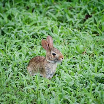 The Sounds of Nature in Your Backyard: Furry Visitors
